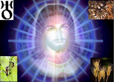 20090520130937-salm-com.jpg